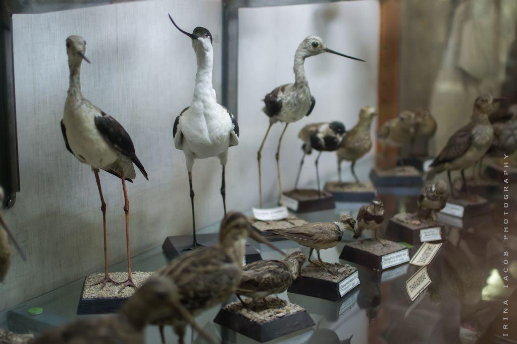 Wisata Edukasi Anak Sekitar Jawa Timur Traveling Yuk Ilustrasi Museum
