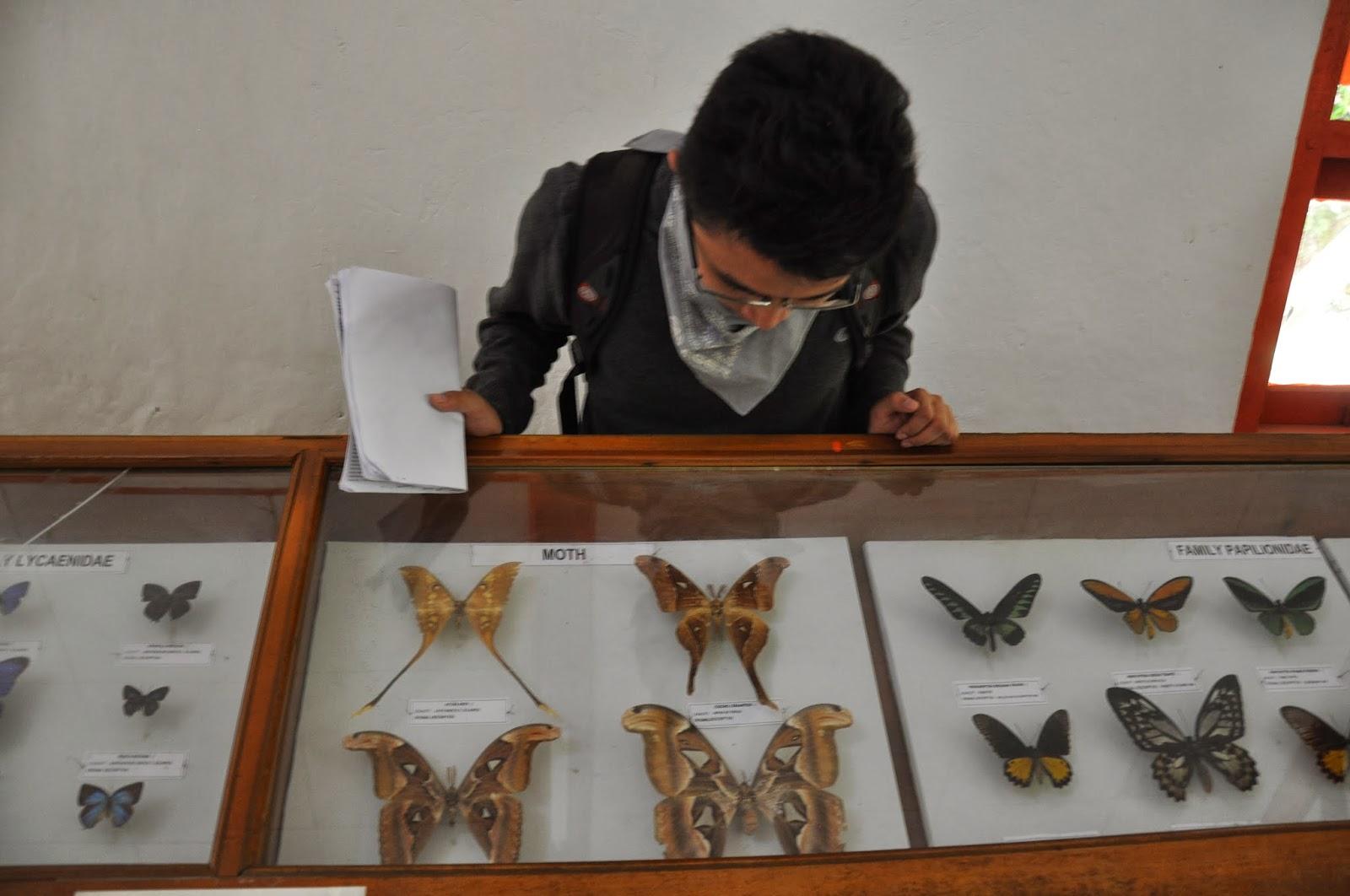 Wisata Edukasi Mengunjungi Museum Biologi Indonesia Kupu Bantimurung Musium Zoologi