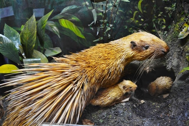 Yuk Temukan Berbagai Jenis Fauna Dunia Museum Zoologi Jelajah Panthera