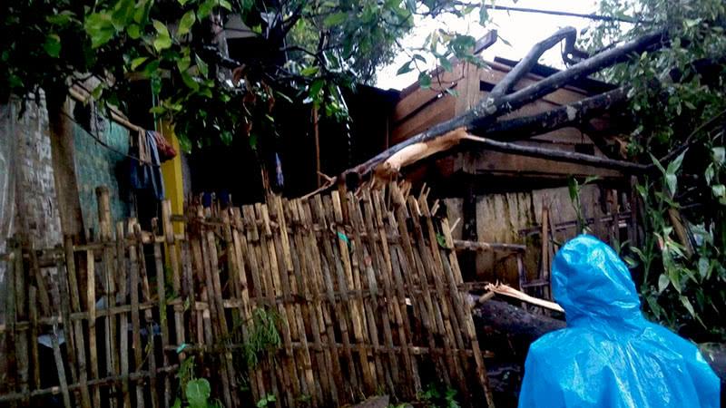 Puting Beliung Terjang 300 Rumah Desa Cempaka Mulya Reruntuhan Pohon