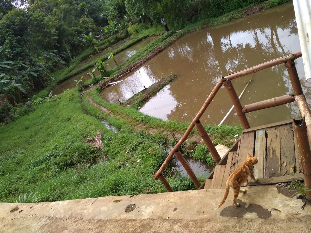 Jual Tanah Kolam Investasi Banjaran Bandung Bonus Ternak Ikan Taman