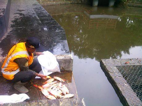 Ditebar Ridwan Kamil Ikan Kolam Taman Lansia Mati Kab Bandung