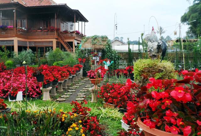 Taman Begonia Lembang Lansia Kab Bandung