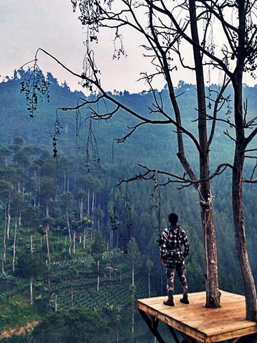 Sky Tree Archives Klikhotel Wisata Kekinian Lodge Maribaya Kab Bandung