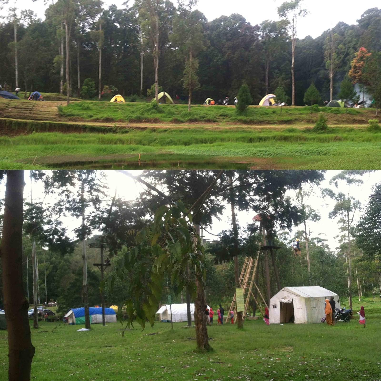 1 Hari Berwisata Bandung Ranca Upas Camping Ground Wisata Kab