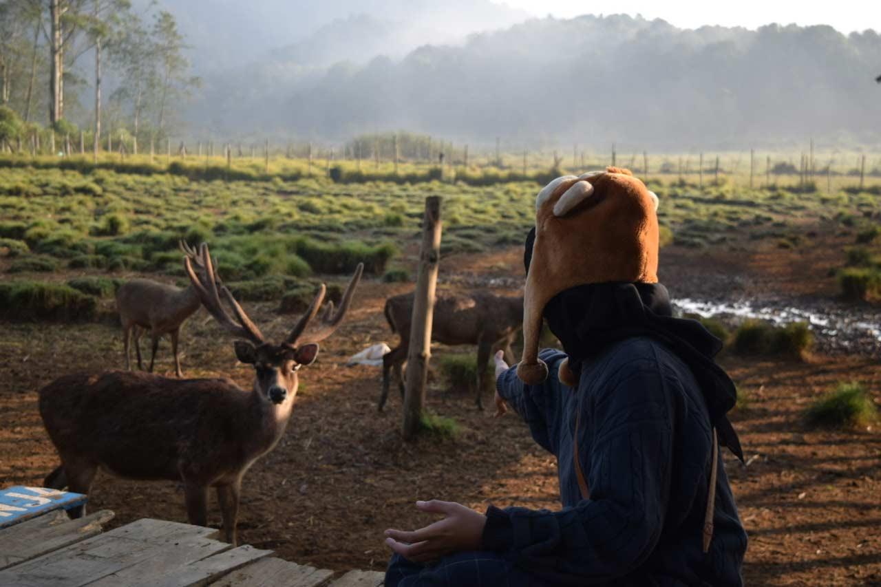 5 Wisata Camping Ground Bandung Menghabiskan Akhir Pekanmu Berbaur Sejuknya