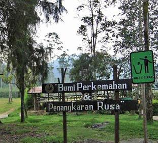 Asyiknya Wisata Bumi Perkemahan Ranca Upas Bandung Tempat Ciwidey Kab