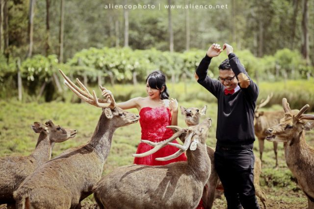 Bandung Tempat Wisata Sekaligus Prewedding Rekomendasi Temapt Ranca Upas Rusa