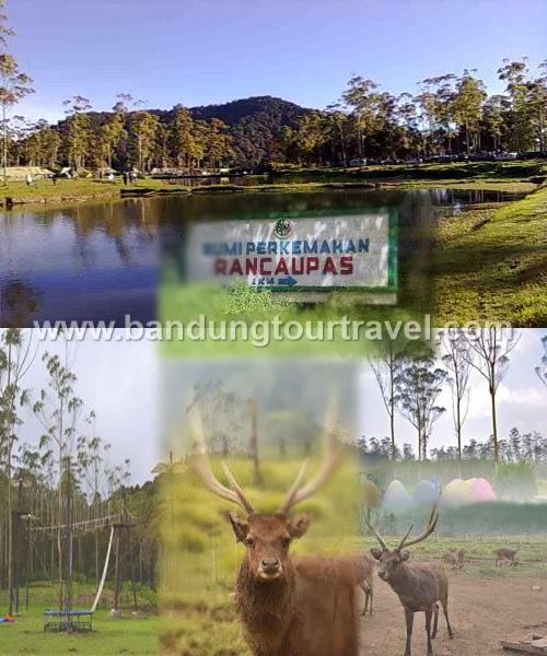 Bandung Tour Travel Ciwideuy Ranca Upas Outbound Wisata City Kab