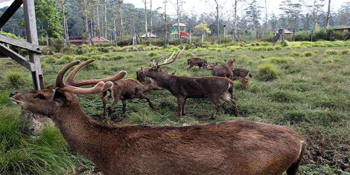 Ranca Upas Wisata Menarik Bandung Epic Id Nama Kabupaten Jawa