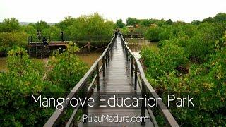 Gerbang Pulau Madura Viyoutube Obyek Wisata Hutan Mangrove Desa Labuhan