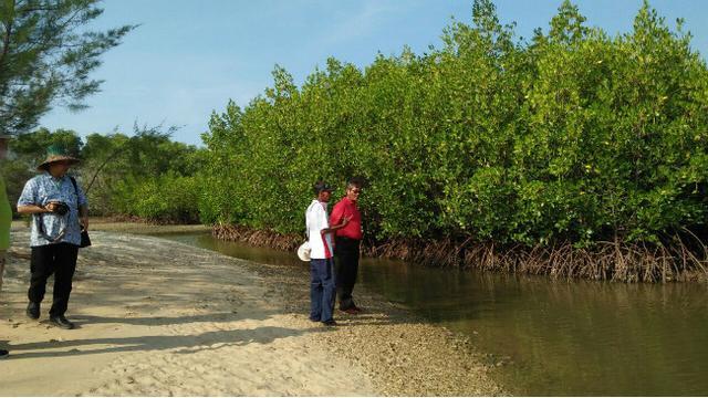 Cerita Sukses Mengelola Taman Mangrove Madura Regional Liputan6 Kuncoro Kukuh