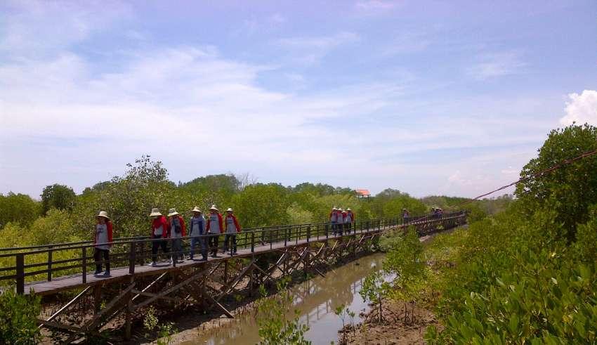 Desa Didorong Jadi Kampung Iklim Businessnews Id Taman Mangrove Bangkalan
