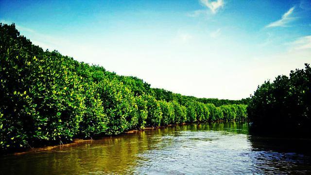 Genjot Ekonomi Desa Bangkalan Diusulkan Jadi Kampung Iklim Ilustrasi Hutan
