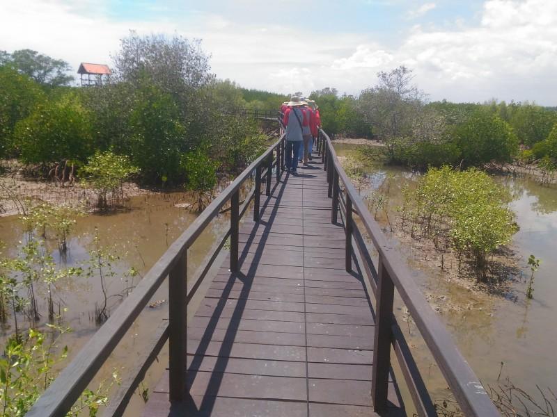 Hiburan Bekas Tambak Udang Disulap Jadi Taman Pendidikan Mangrove Labuhan