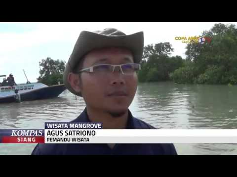 Hutan Mangrove Jadi Lokasi Wisata Youtube Labuhan Kab Bangkalan
