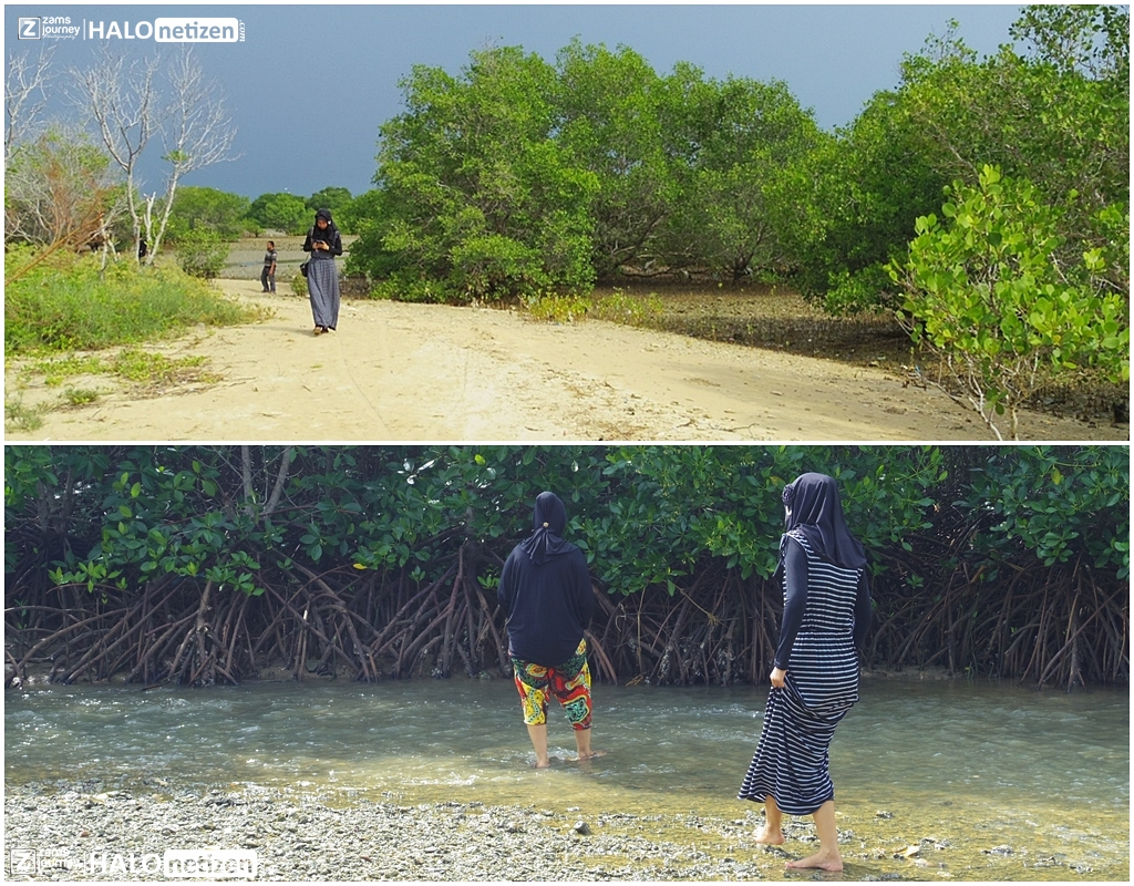 Keren Hutan Mangrove Cantik Berada Labuhan Sepuluh Madura Masuk Area