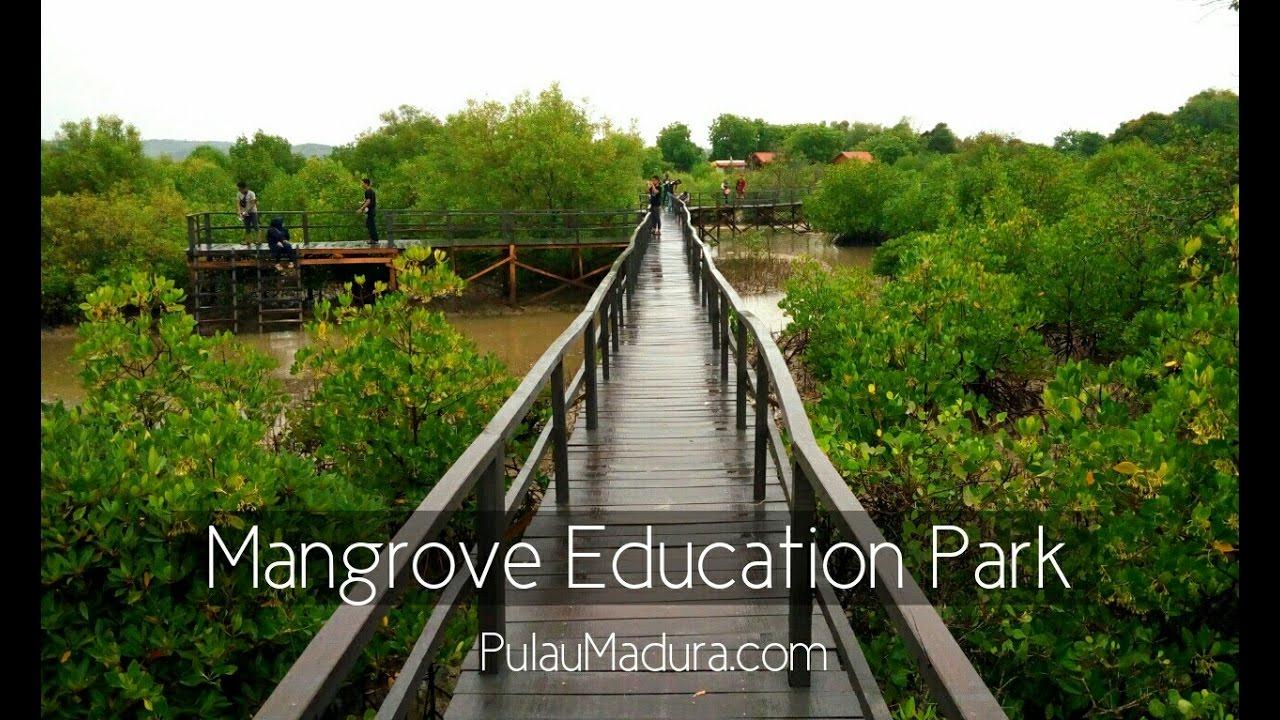 Obyek Wisata Hutan Mangrove Desa Labuhan Kabupaten Bangkalan Youtube Kab