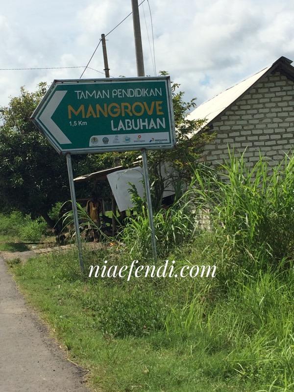 Pesona Taman Pendidikan Mangrove Labuhan Nia Efendi Menyusuri Jalan Setapak