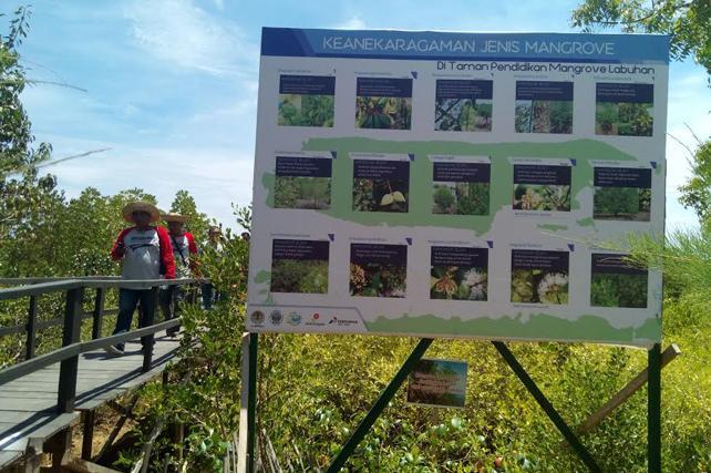 Suarasurabaya Net Taman Pendidikan Mangrove Tpm Desa Labuhan Kecamatan Sepulu