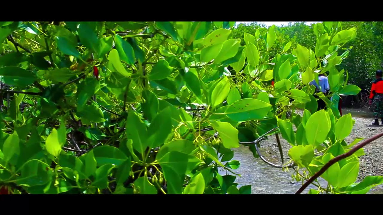 Taman Pendidikan Ekowisata Mangrove Kab Bangkalan Youtube Labuhan