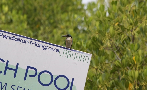 Taman Pendidikan Mangrove Harapan Masyarakat Desa Labuhan Bangkalan Klikanggaran 1