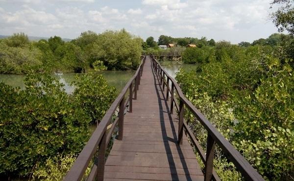 Taman Pendidikan Mangrove Harapan Masyarakat Desa Labuhan Kondisi Kritis Menjelma