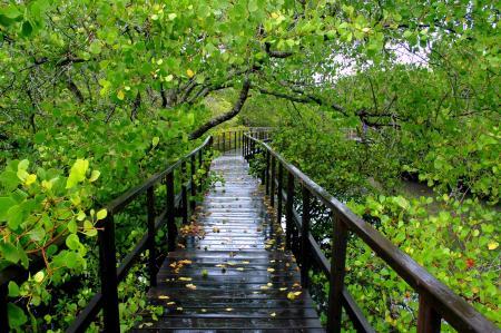 Wisata Hutan Mangrove Desa Labuhan Bangkalan Madura Kab