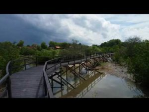Wisata Hutan Mangrove Desa Labuhan Bangkalan Madura Sedikit Informasi Bagi