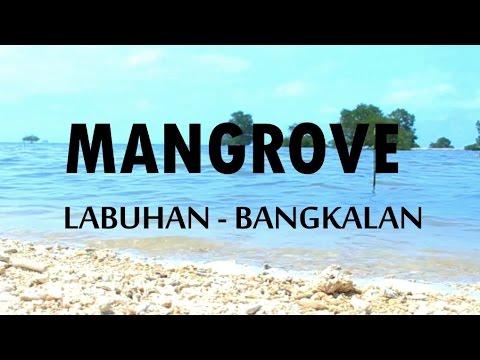 Wisata Mangrove Bangkalan Madura Youtube Labuhan Kab