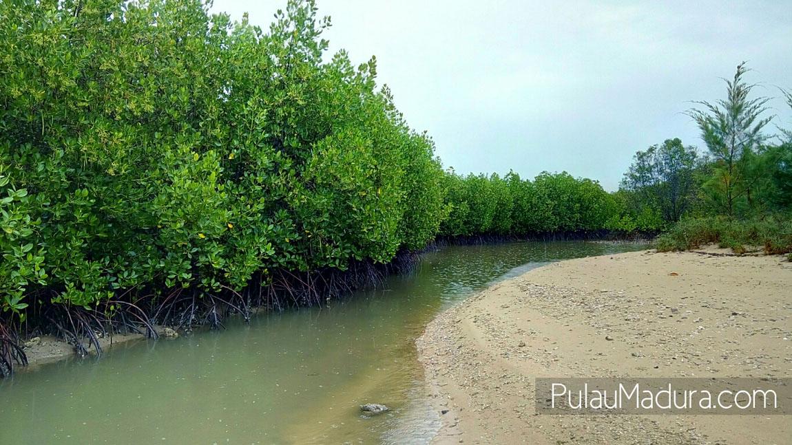 Wow Obyek Wisata Alam Hutan Mangrove Desa Labuhan Kecamatan Sepulu