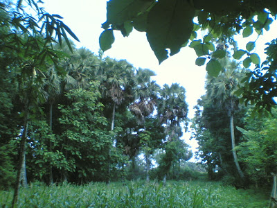 Keelokan Pantai Maneron Sepulu Bangkalan Nuansa Kehidupan 11 March 2012