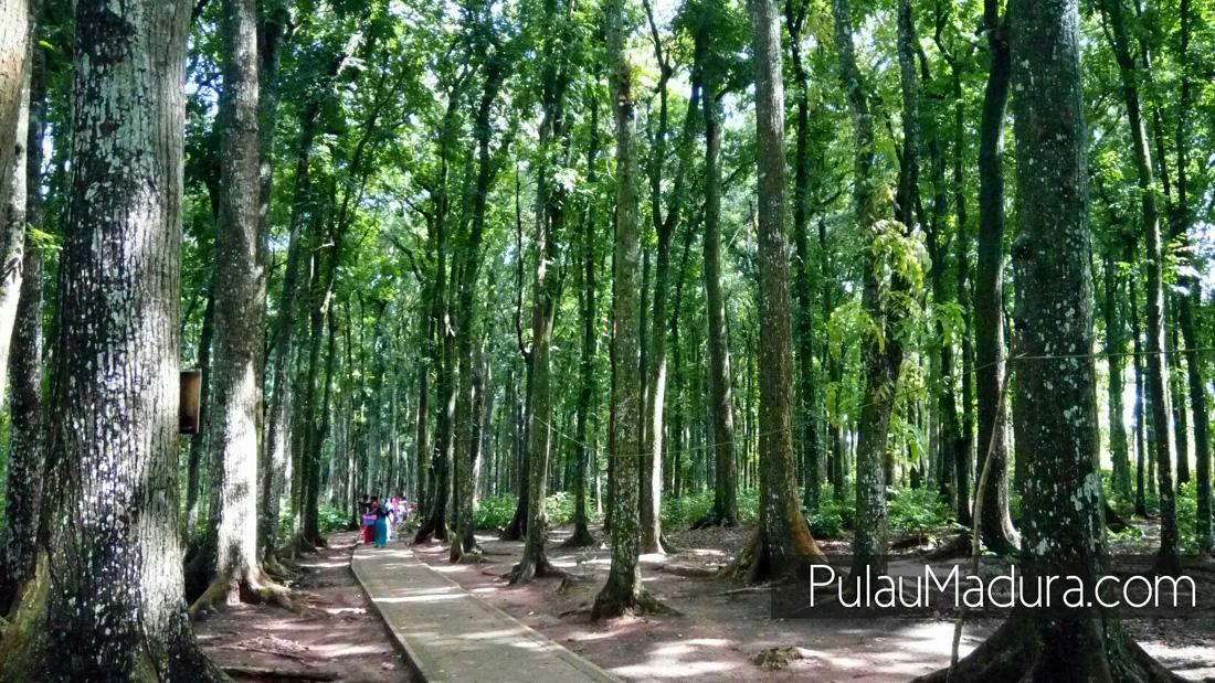 Obyek Wisata Bukit Geger Kabupaten Bangkalan Gerbang Pulau Madura Hutan