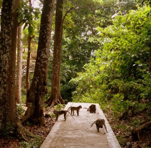 Pesona Keindahan Wisata Gunung Geger Bangkalan Daftar Tempat Disuguhi Oleh