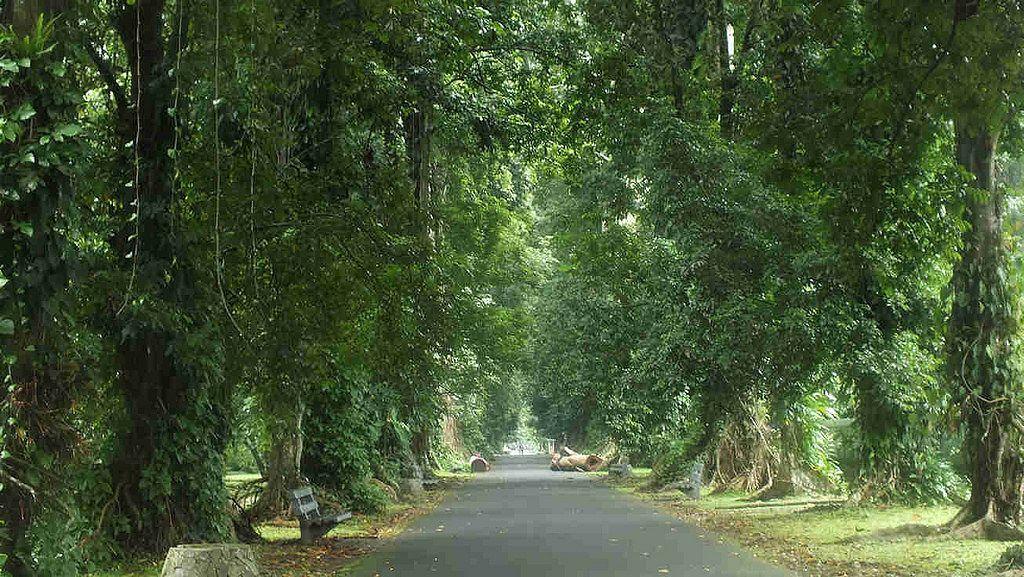 Wisata Anglir Mendung Kebun Raya Bogor Kab Banjarnegara