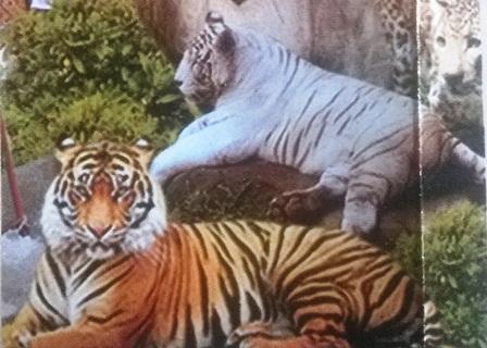 Wisata Buatan Alam Kabupaten Banjarnegara Kebun Binatang Anglir Mendung Kab