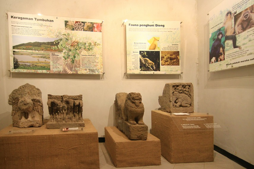 Mengenal Dieng Museum Kailasa Indonesiakaya Eksplorasi Terdapat Berada Ketinggian Flora