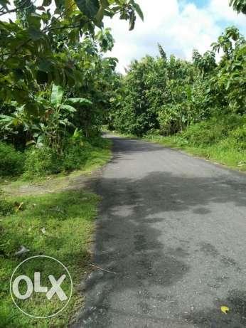 Arsip Tanah Sawah Berada Bantul Yogyakarta Dekat Goa Tampilkan Gambar