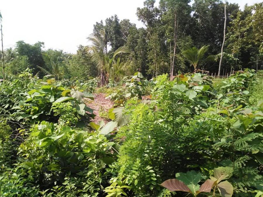 Tanah Dijual Bantul Murah Jogja Strategis Idr 1 Juta Pajangan