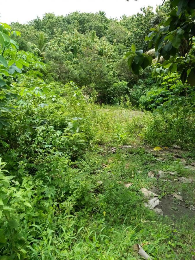 Tanah Dijual Pekarangan Murah Luas Pajangan Bantul Dekat Goa Selarong
