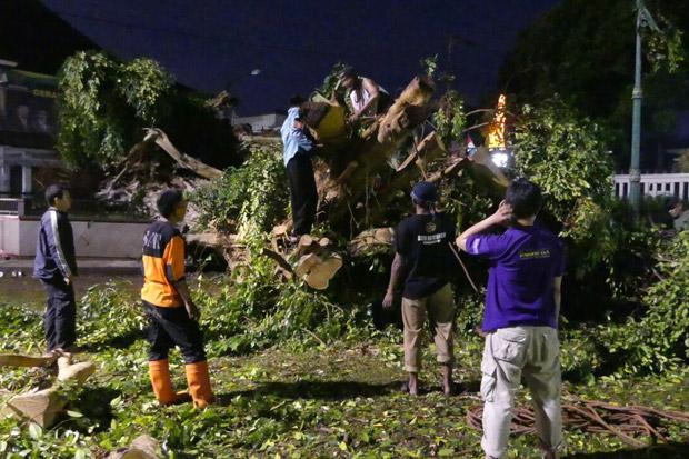 Gelar Wayang Kulit Mendadak Pohon Beringin Raksasa Alun Tumbang Purwokerto