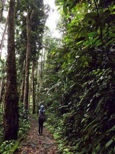 10 Gambar Wisata Baturaden Purwokerto Harga Tiket Masuk Lokasi Hutan