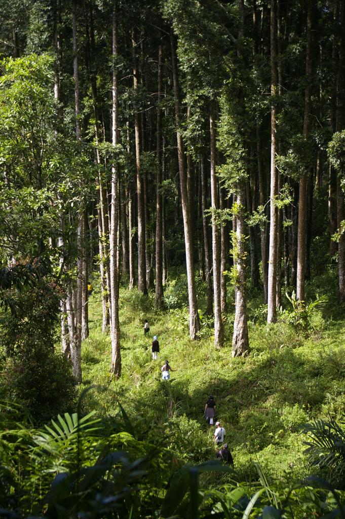 Anguillidae Sidhat Eel Pelus Baturraden Adventure Forest Hiking Track Baf