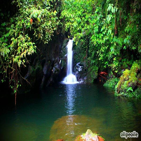 Baturraden Adventure Forest Wisata Alam Terbaik Purwokerto Lihat Telaga Bening