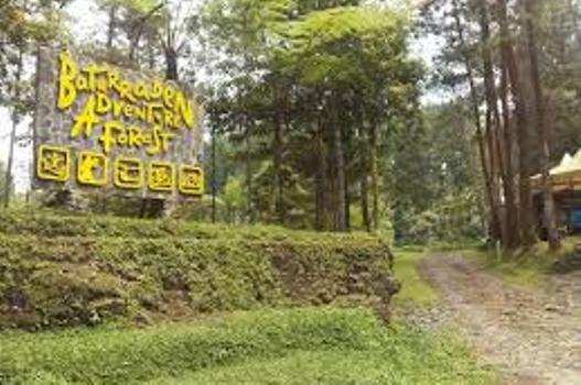 Berwisata Sambil Belajar Alam Baturraden Adventure Forest 1 Baf Kab