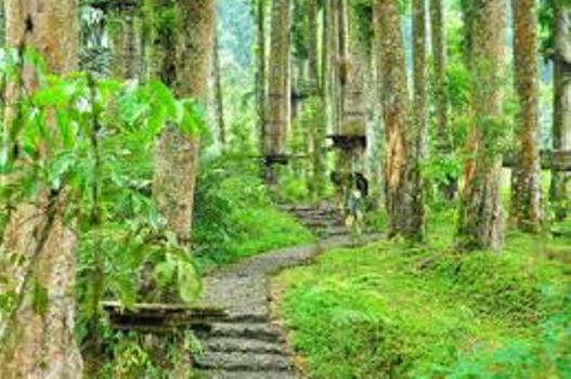 Berwisata Sambil Belajar Alam Baturraden Adventure Forest 2 Baf Kab