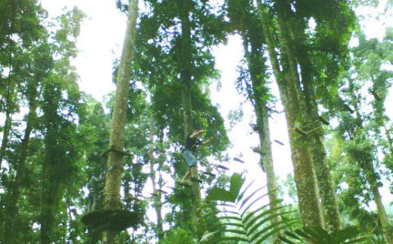 Sensasi Petualangan Seru Hutan Baturraden Tribunnews Adventure Forest Baf Kab