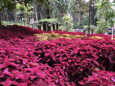 10 Gambar Kebun Raya Baturaden Purwokerto Harga Tiket Masuk Menawan