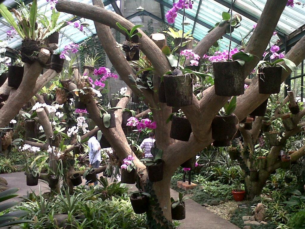 Anggrowisata Anggrek Layak Dikembangkan Baturraden Suara Pembaruan Griya Kebun Raya