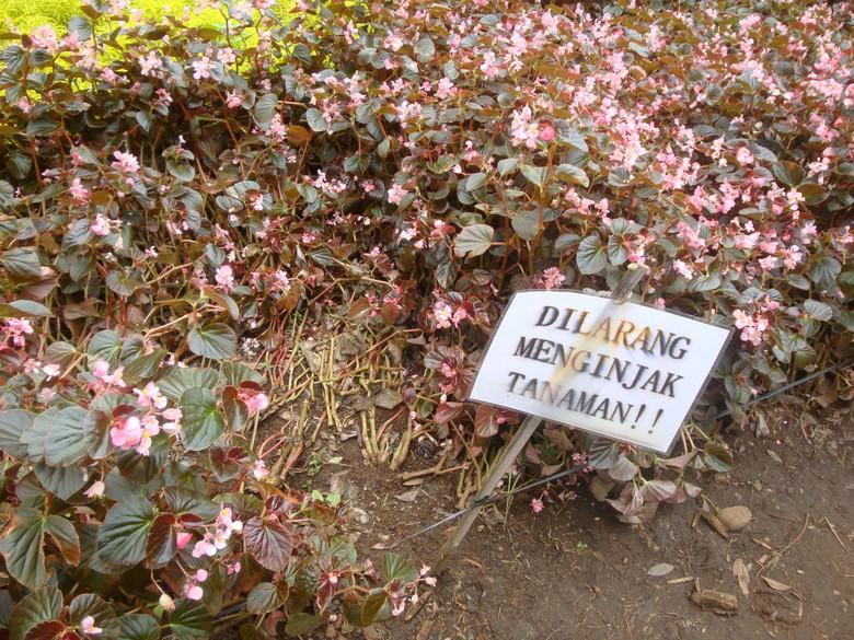 Cerita Petugas Kebun Raya Baturraden Setelah Taman Bunga Rusak Akibat